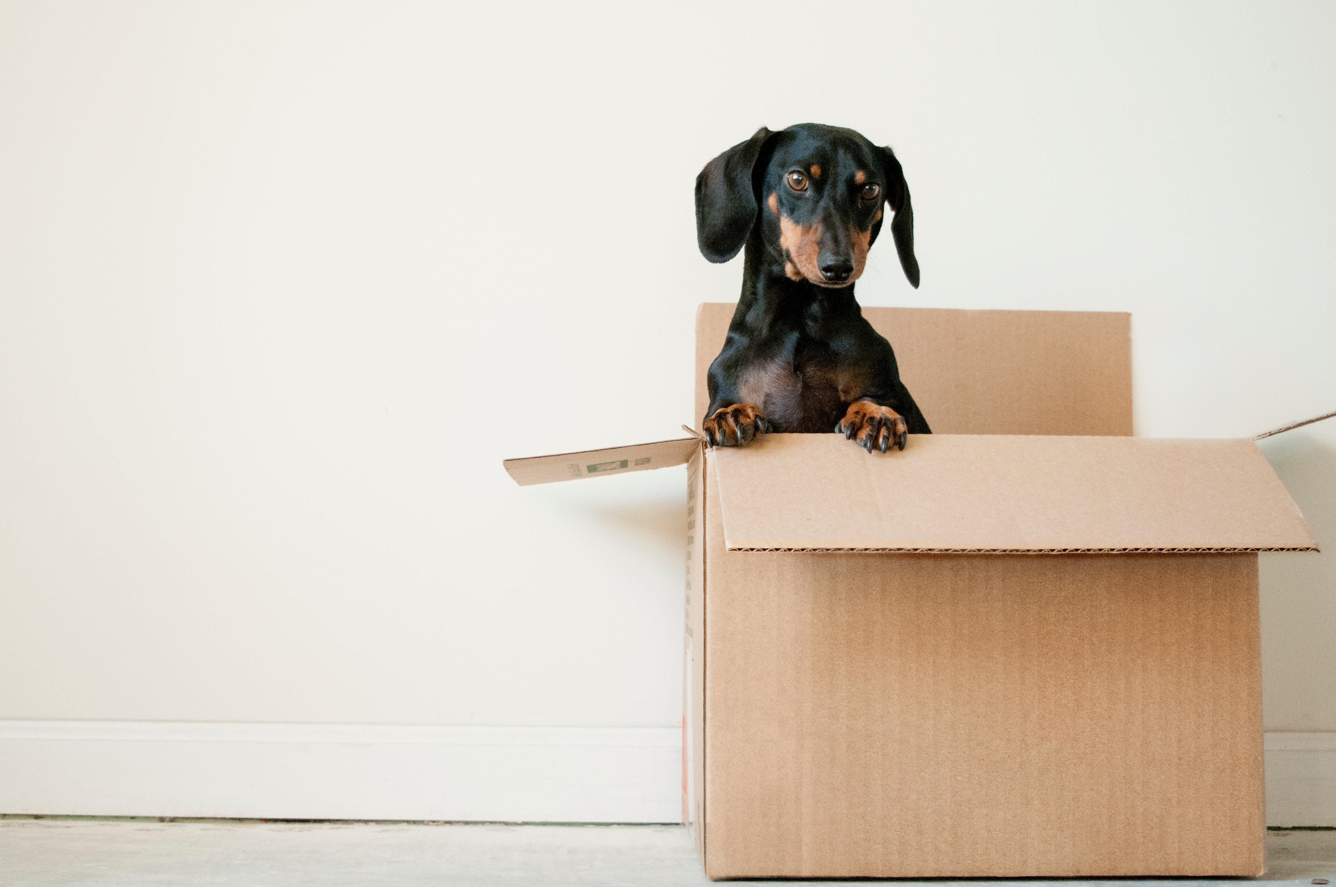 5 anledningar till varför alla hundar älskar Rockybox