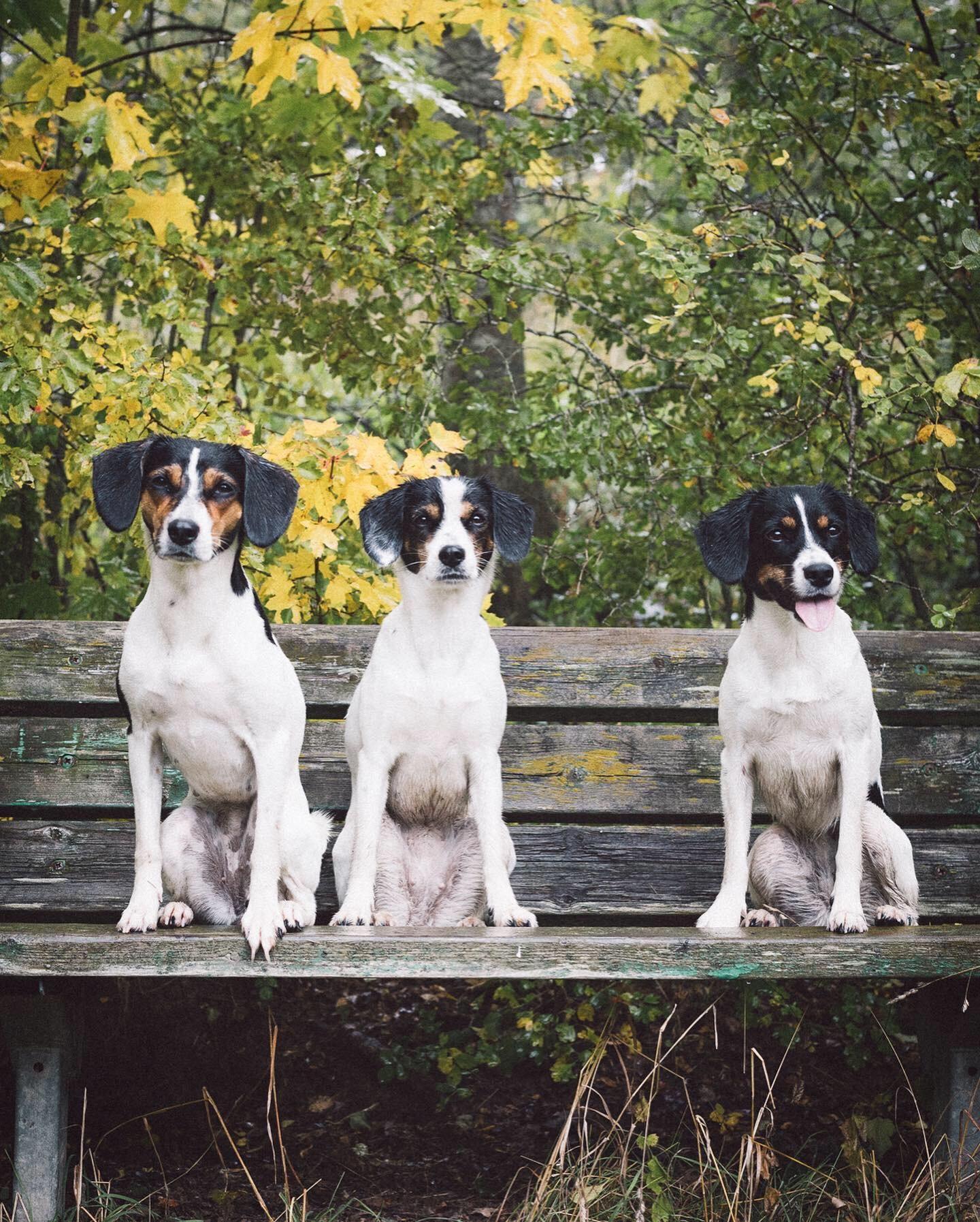 Allt du behöver veta om olika typer av hundleksaker