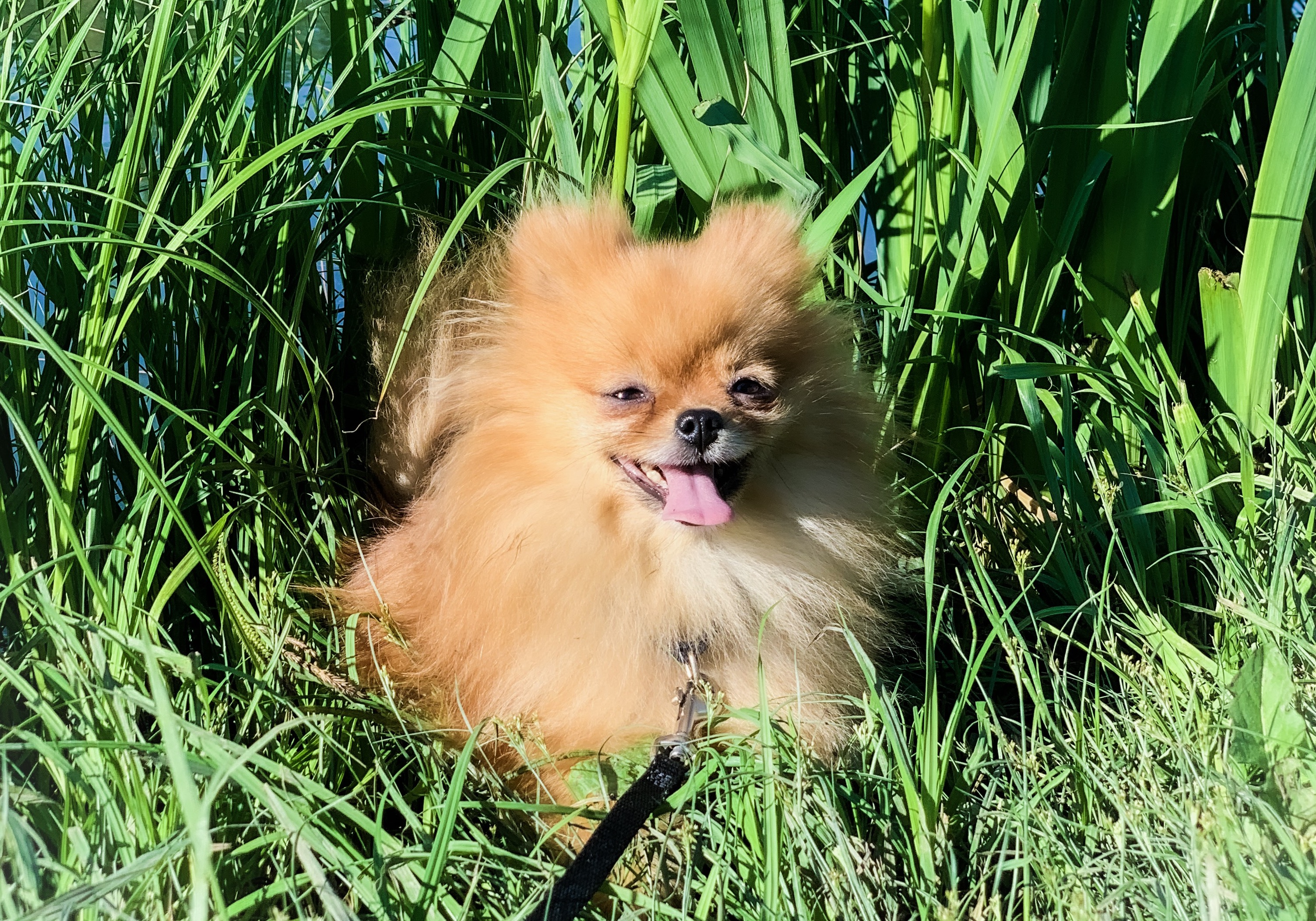 Allt Om Pom: Aktivera & stimulera din hund
