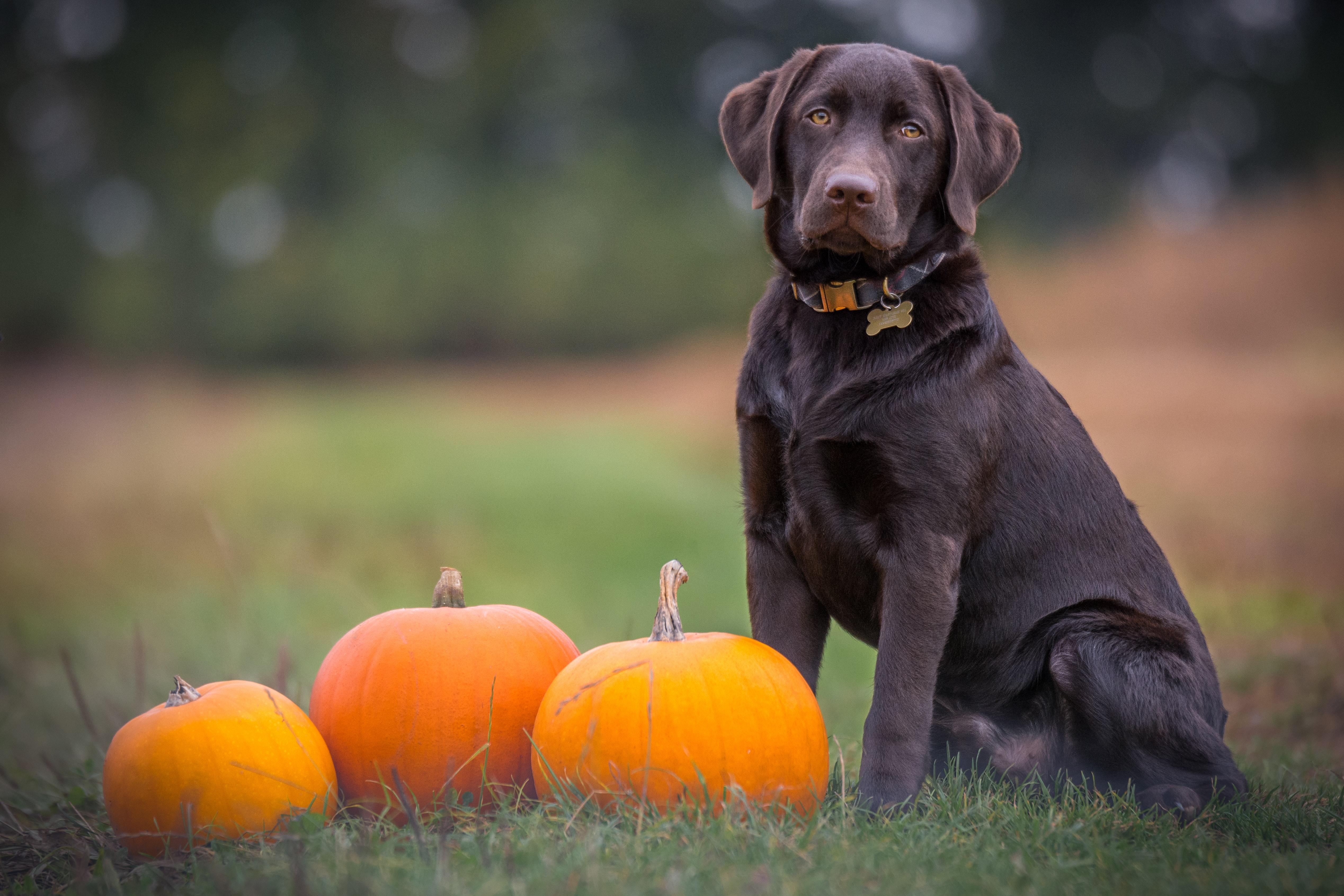 5 tips på halloweenbilder utan utklädnad