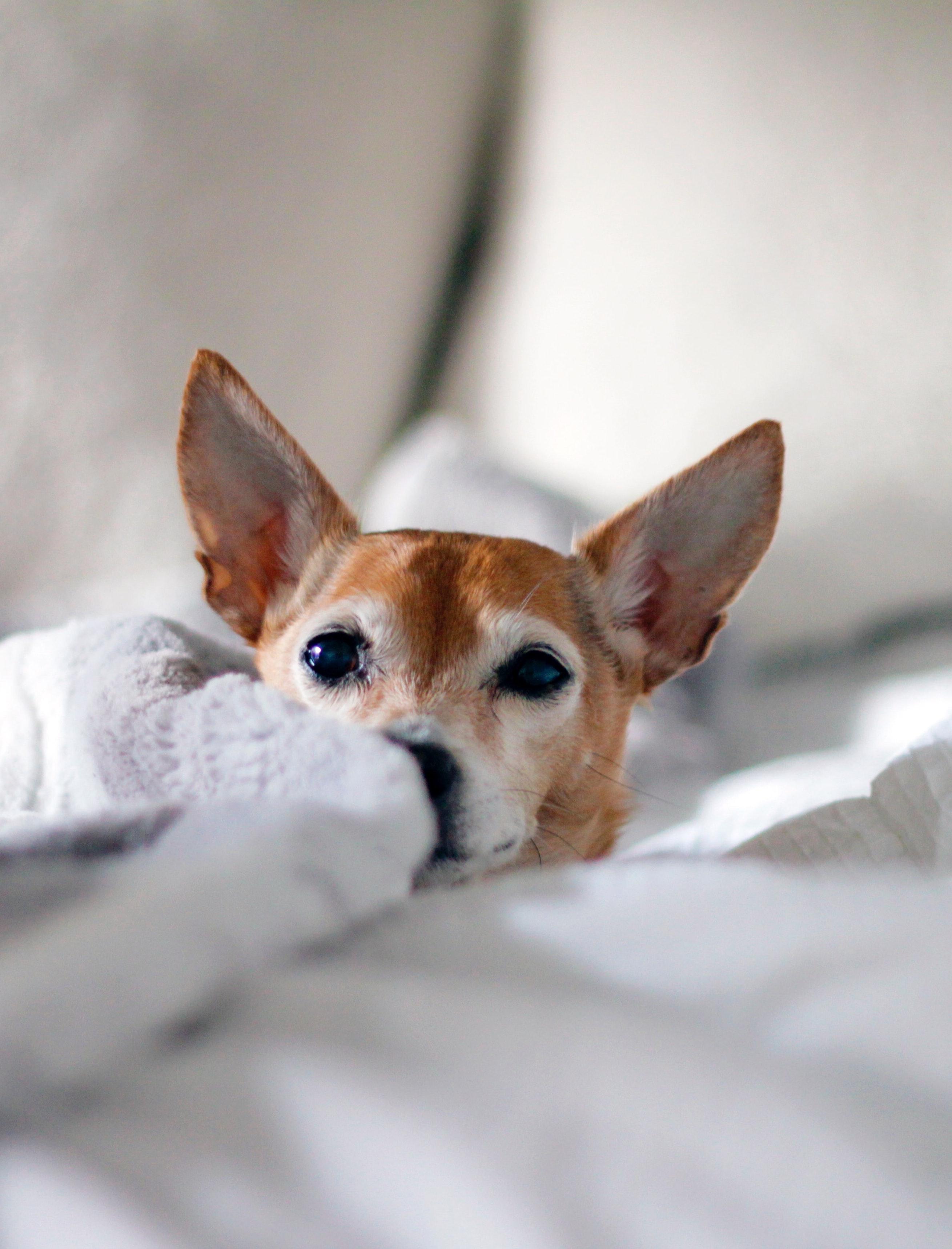 Din hunds naturliga behov att tugga