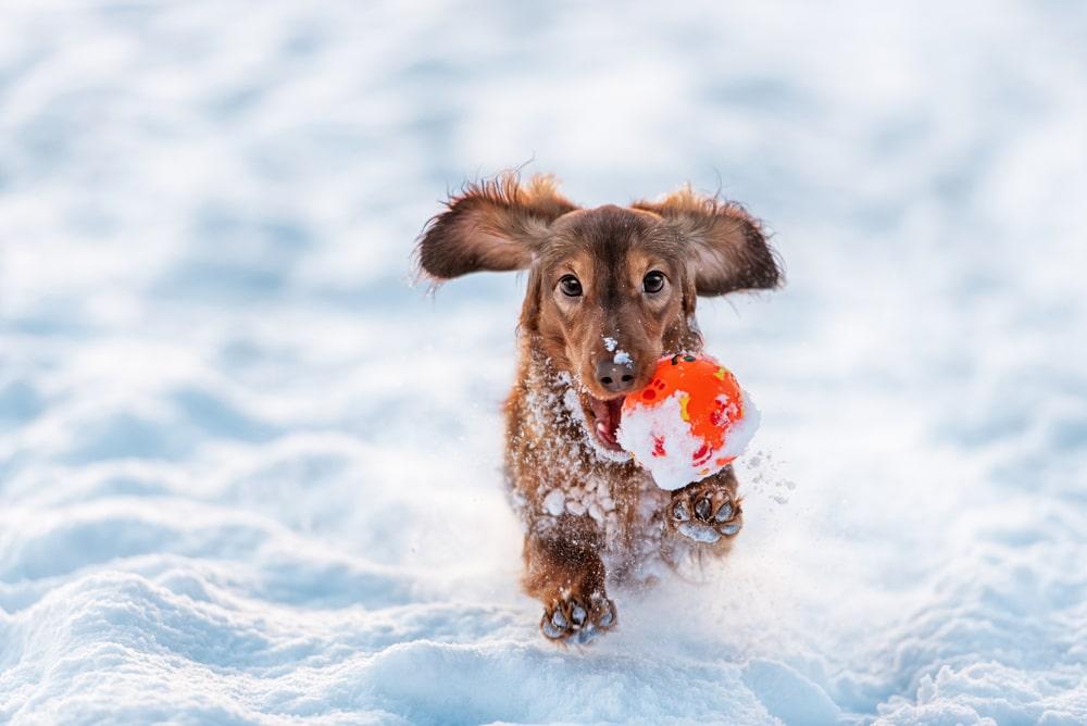 Kul i snön!