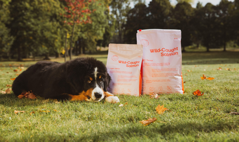 Buddy Pet Foods – månadens varumärke ✨