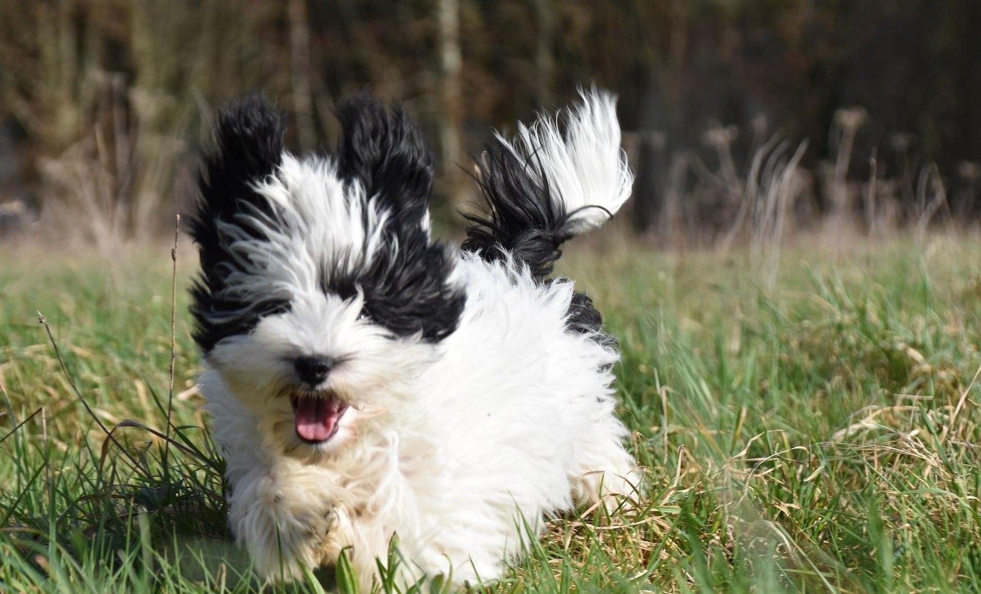 """Roligt trick! Lär din hund att sitta """"kanin"""" 🐇"""