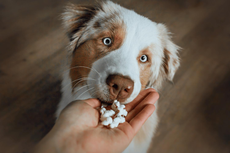 Handen på hjärtat – lär hunden att hälsa fint ❤️