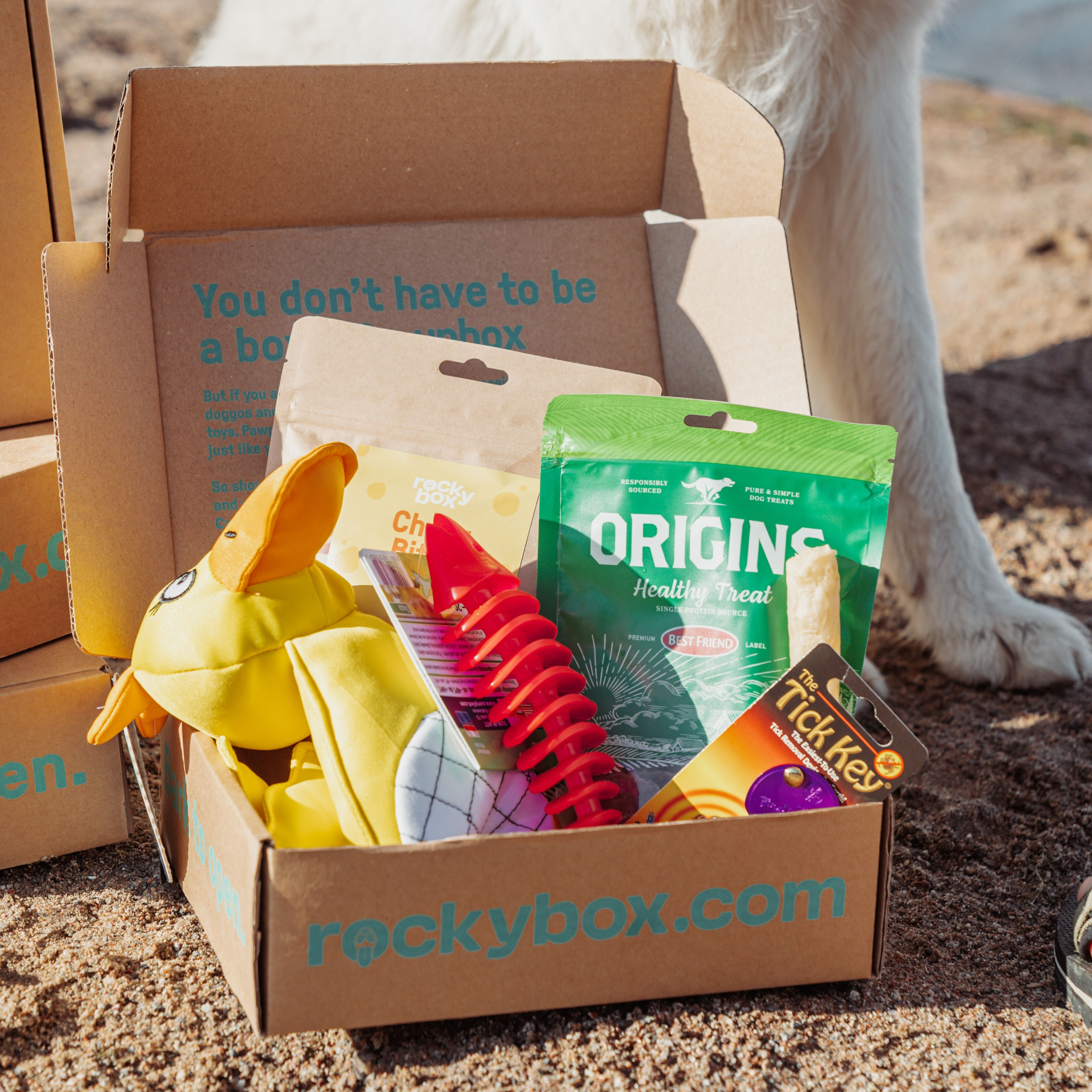 Redo för Beach Paw-ty? Sommarens box är här! 😎