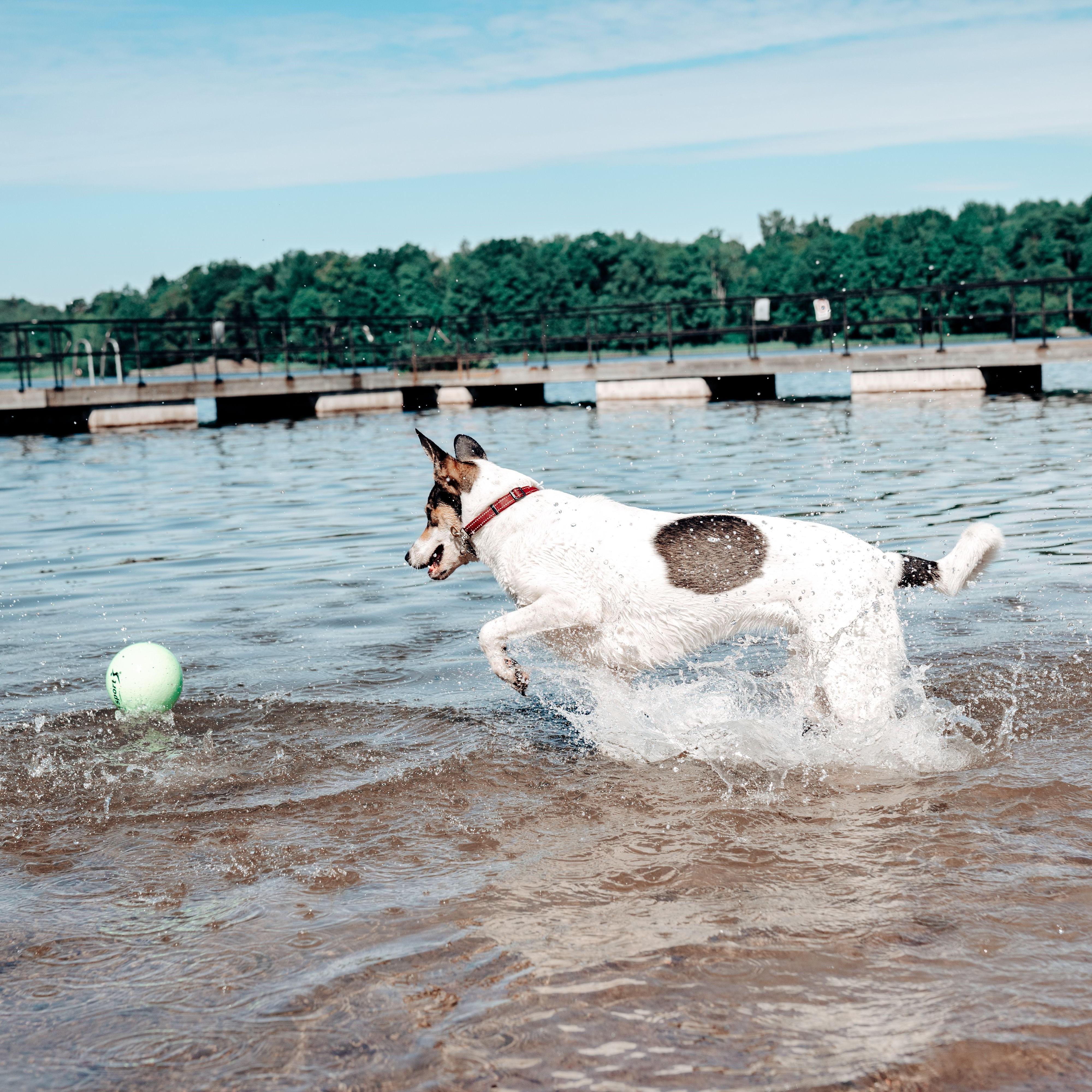 Så lär du din hund att älska att bada 🌊