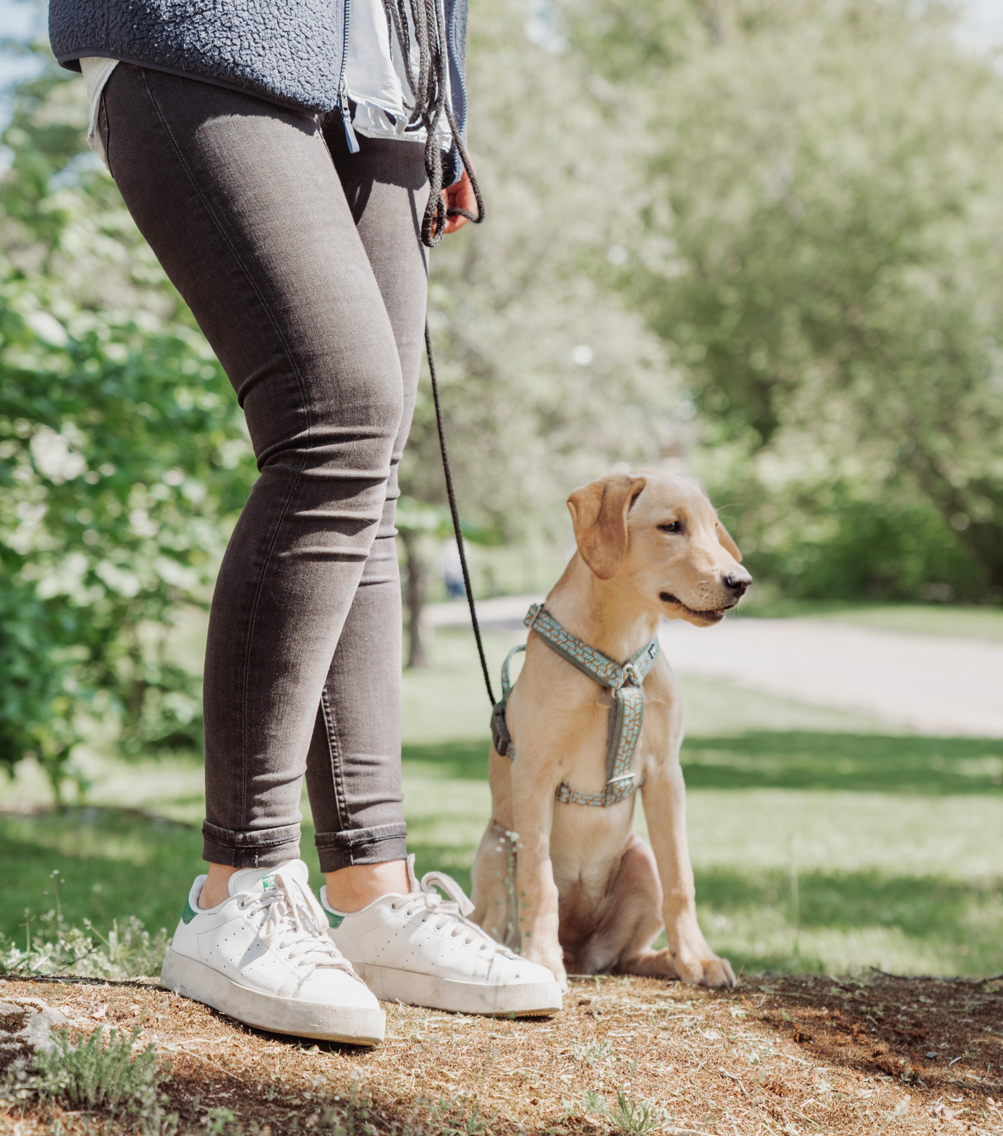 Sitt & spana – för hundar med spring i benen! 🏃