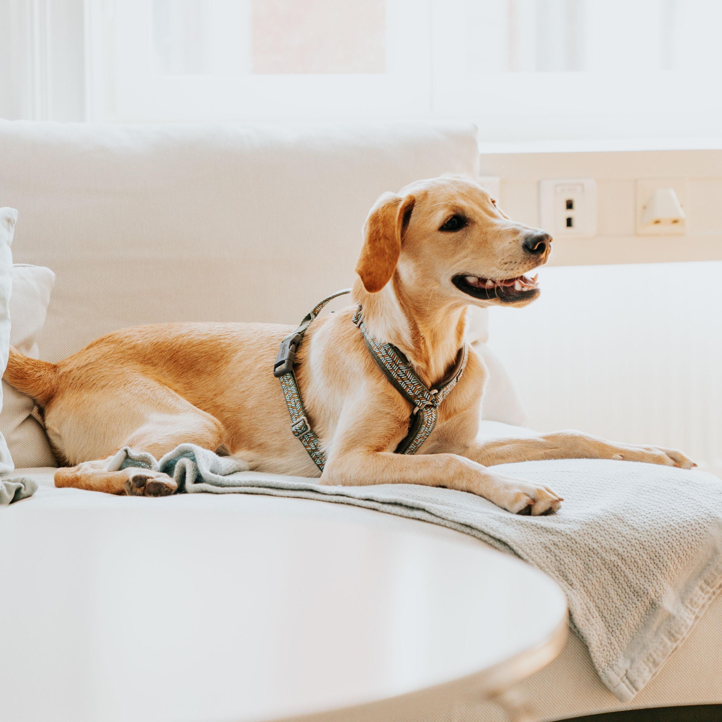 Så lär du din hund att vara ensam hemma – del 1