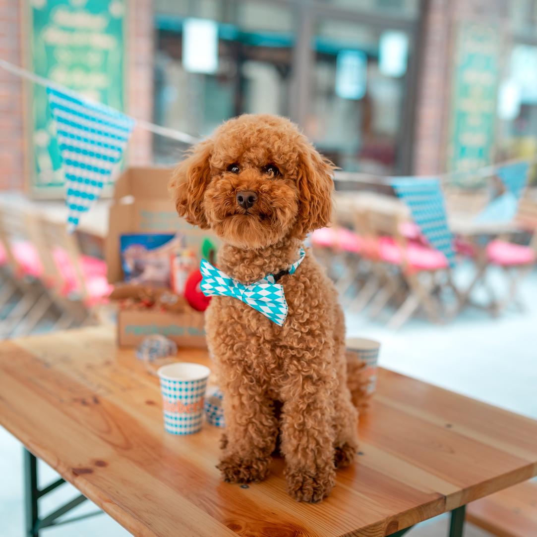 Hundvänliga caféer, barer & restauranger
