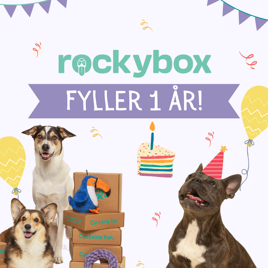 Hurra!! Rockybox firar 1 år 🥳